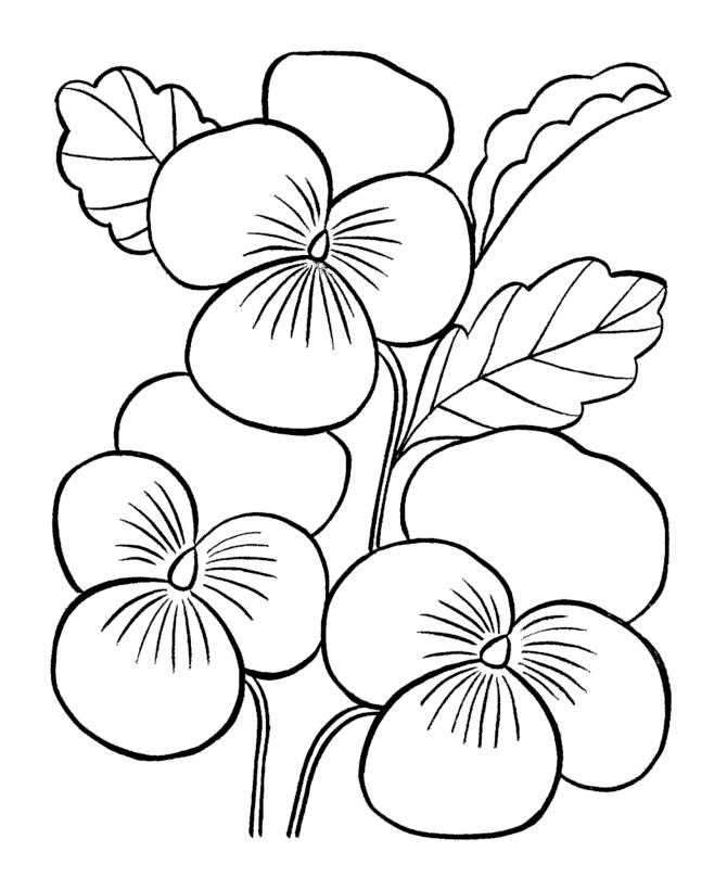desene de colorat planse flori panselute